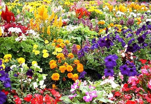 mixedflowers3